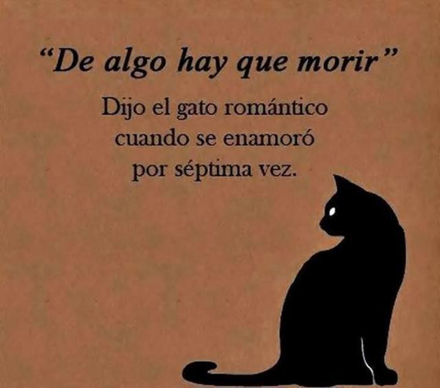 """Anónimo – """"De algo hay que morir"""" dijo el gato romántico cuando se enamoró por séptima vez"""